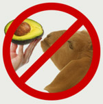avocados toxic to pets