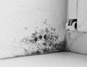 dangerous mold in the home